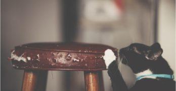 cat scratching 01