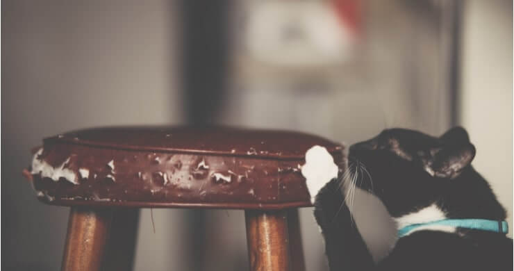 Protect Your Furniture From Your Beloved Pets